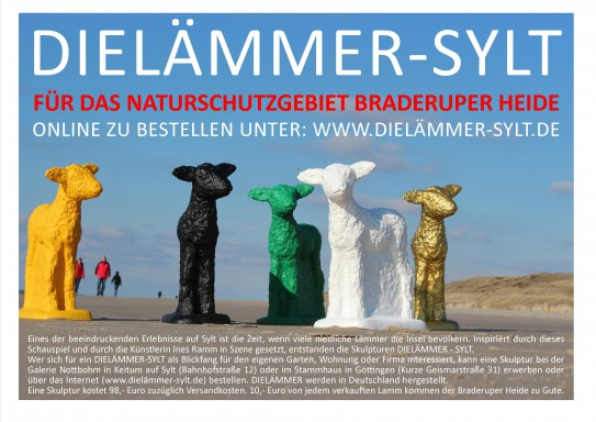 DIELÄMMER-SYLT-Braderuper-Heide-wwwHinweis